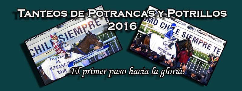 Tanteos de Potrancas y Potrillos 2016